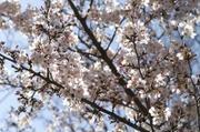 Minoruta_sueet_035