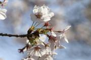 Minoruta_sueet_038