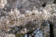 Minoruta_sueet_042